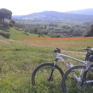 (bici e campagna)